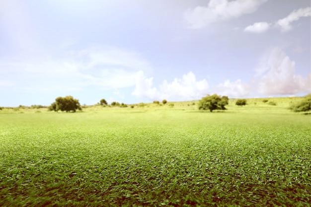 Grüne wiese mit bäumen