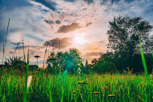 Grüne wiese unter blauem himmel mit sonnenuntergang im grünen park