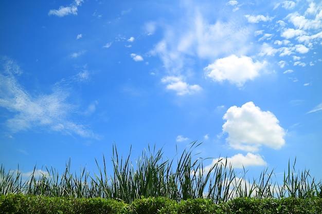 Grüne wiese unter dem sonnigen blauen himmel mit weißen wolken