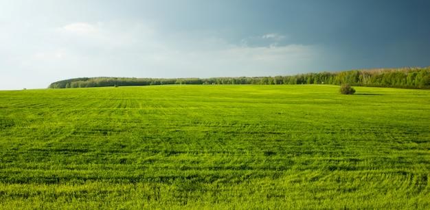 Grüne wiese vor dem sturm