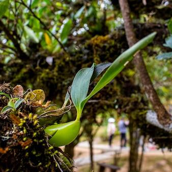Grüne wilde orchidee auf dem stamm am wald mit kopienraum.