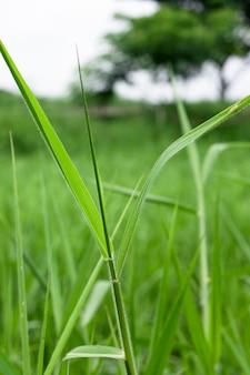 Grüne wildgras-tapete mit selektivem fokus