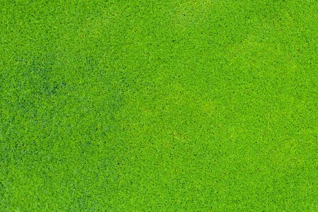 Grüne winde hintergrund hintergrund details luft draufsicht