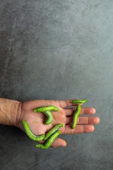 Grüne würmer in den händen des menschen