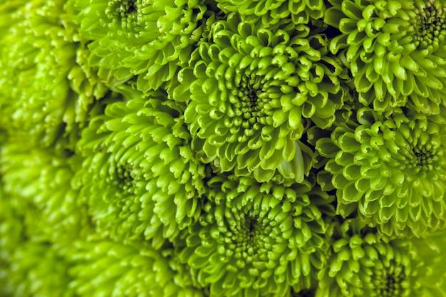 Grüne zierpflanze mit kleinen blättern.