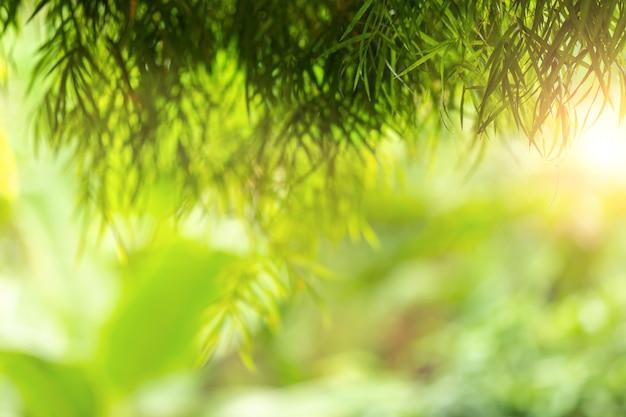 Grüne zusammenfassung des unschärfennaturensonnenlichts mit bokeh und blendenfleckeffekt für hintergrund
