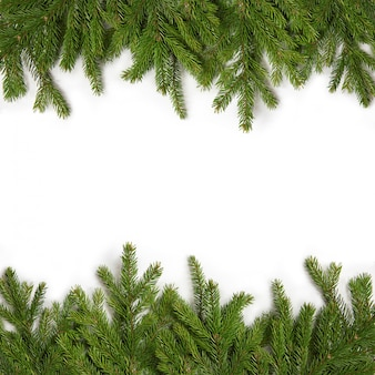 Grüne zweige der fichte auf einem weiß getrennt. grußkarte für weihnachten und neujahr. rahmen aus immergrünen fichtenzweigen.