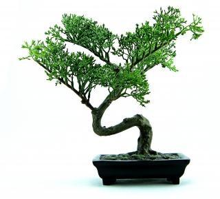 Grünem kunststoff bonsai