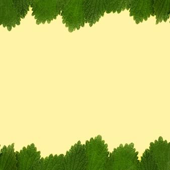 Grüner balsamminzenblattrahmen auf gelbem hintergrund
