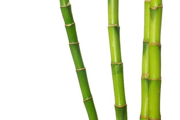 Grüner bambus lokalisiert auf weißem hintergrund