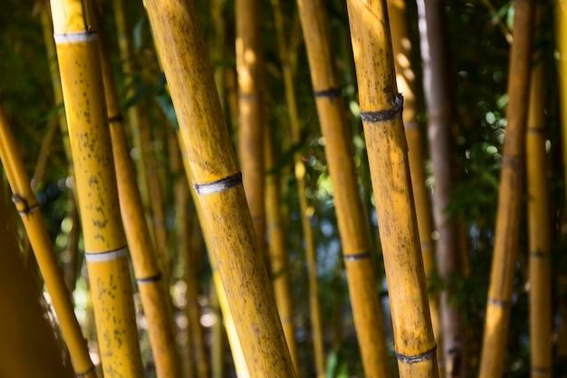 Grüner bambuswald bei tageslicht