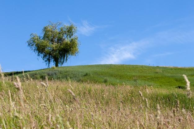Grüner baum auf dem feld mit gras und ährchen