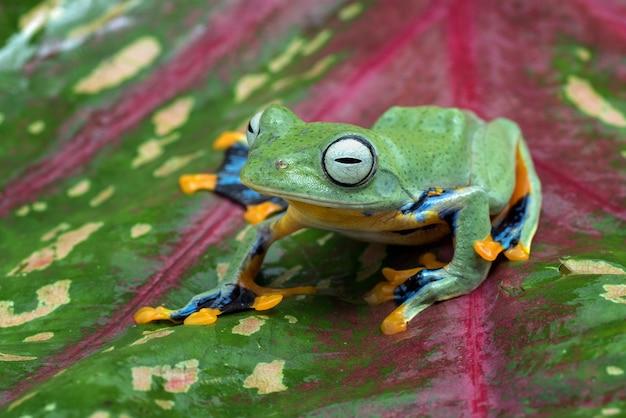 Grüner baum, der frosch innerhalb des anthuriumblattes fliegt
