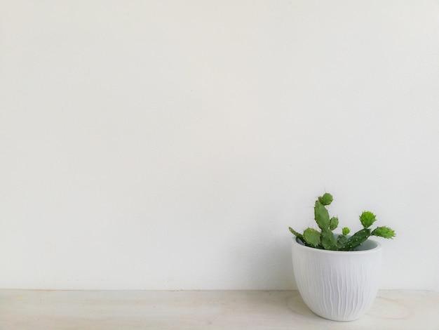 Grüner baum mit weißem wandhintergrund