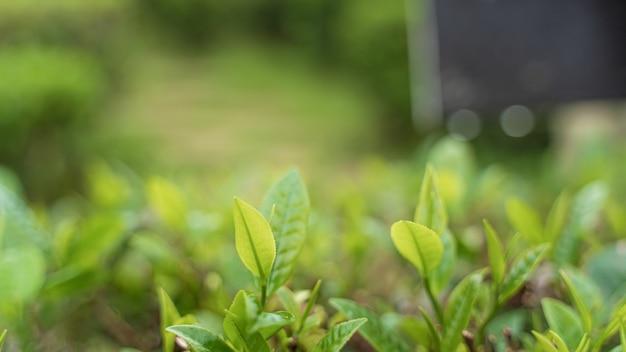 Grüner baum unscharfer hintergrund