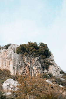Grüner baum vor felsigem berg gegen blauen himmel