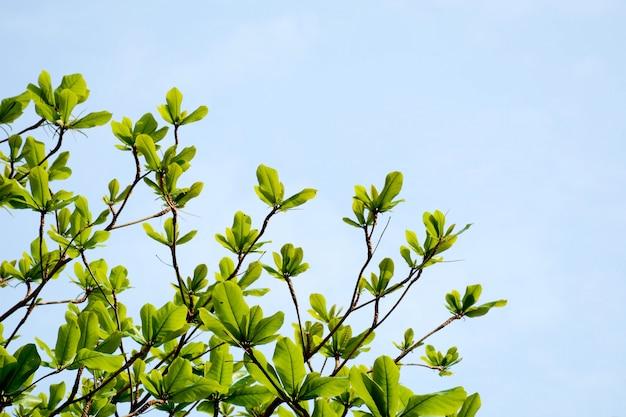Grüner baumast auf hintergrund des blauen himmels