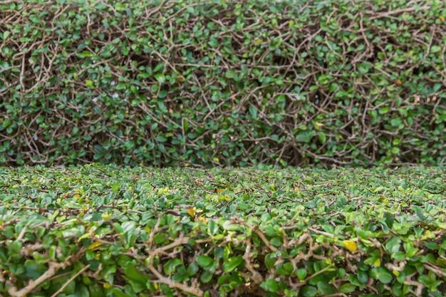 Grüner baumzaun