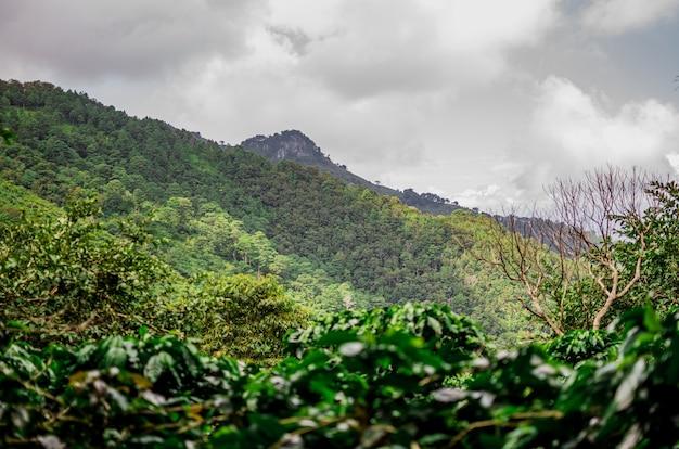 Grüner berg in guatemala