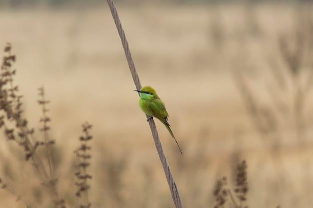 Grüner bienenfresservogel auf einem zweig