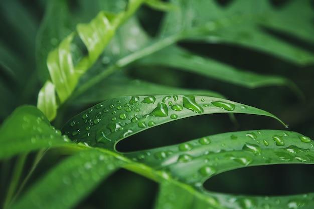 Grüner blätterbeschaffenheitshintergrund mit regenwassertropfen
