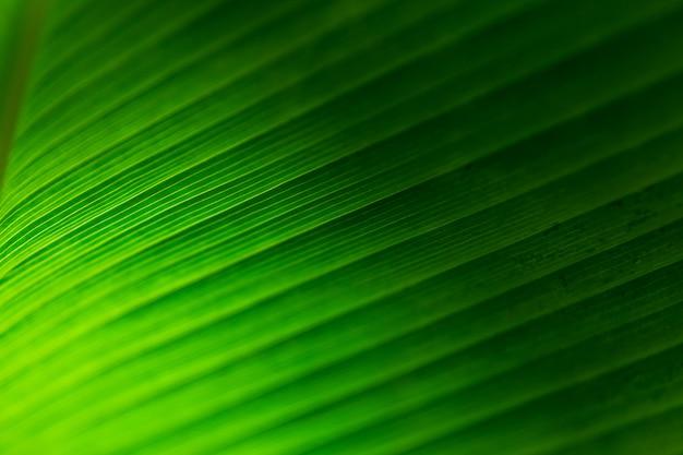 Grüner blatt-beschaffenheitshintergrund mit sonnenlicht