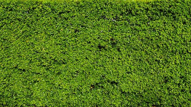Grüner blatthintergrund der natur