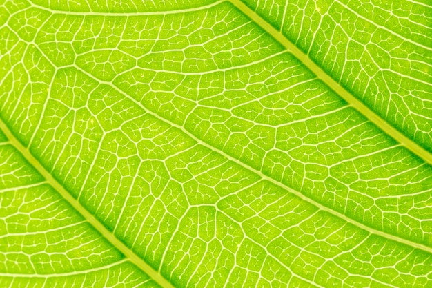 Grüner blattmuster-beschaffenheitshintergrund mit licht hinten.