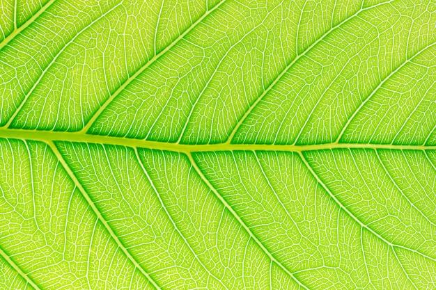 Grüner blattmuster-beschaffenheitshintergrund