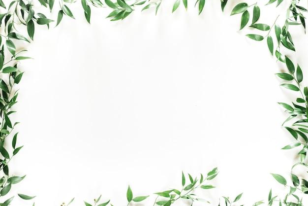 Grüner blattrahmen des baumes auf weiß