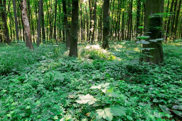 Grüner blattwald