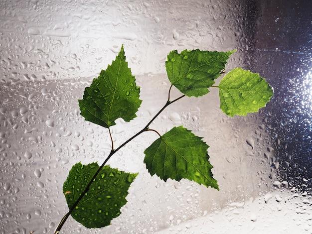 Grüner blattwassertropfen auf glasfenstern befeuchten feuchtigkeitsumwelt. nasse feuchtigkeitsumgebung des grünen wassertropfens, neues regenzeitkonzept der natur