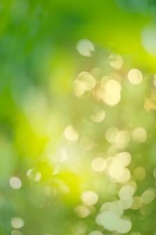 Grüner bokeh hintergrund. grüner bio unscharfer hintergrund.