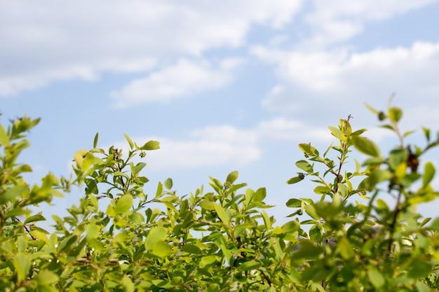 Grüner busch gegen blauen himmel