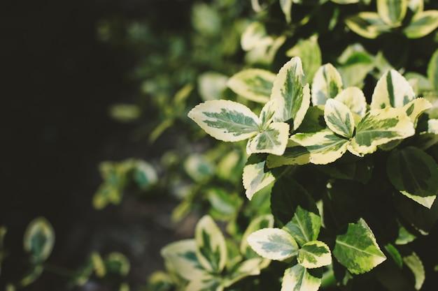 Grüner bush-abschluss oben