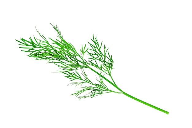 Grüner dillzweig auf weißem hintergrund