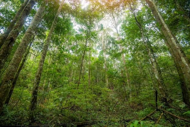 Grüner dschungelbaum mit grünen blättern und sonnenlicht und pflanzendetailnatur im wald