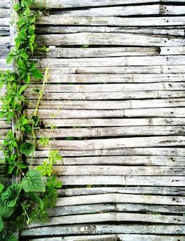 Grüner efeu wackelt auf dem alten dunklen bambus, der vom rustikalen hausboden hölzern ist, haben kopienraum für hintergrund