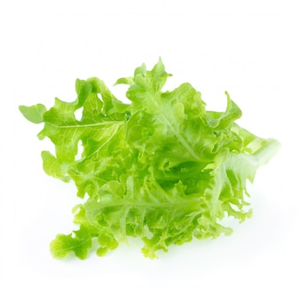 Grüner eichenblattkopfsalat lokalisiert auf einem weißen hintergrund