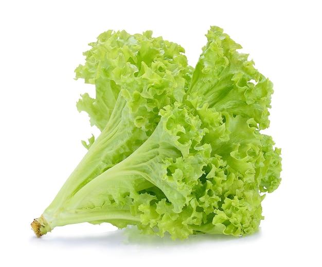 Grüner eichensalat auf weißem hintergrund.