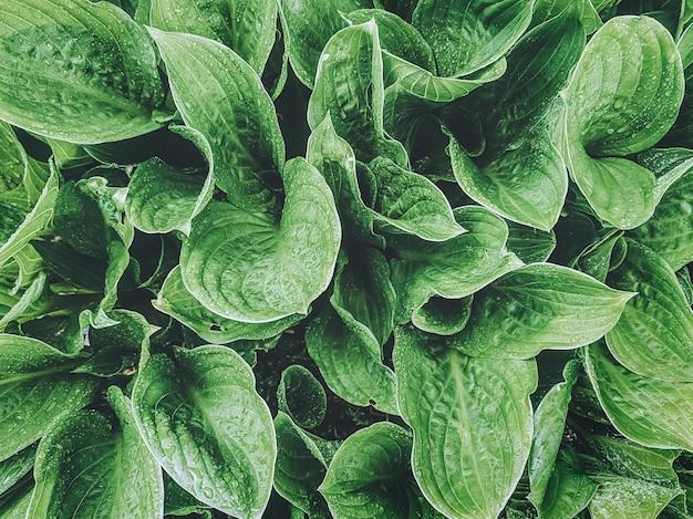 Grüner exotischer pflanzenhintergrund. nahaufnahme.