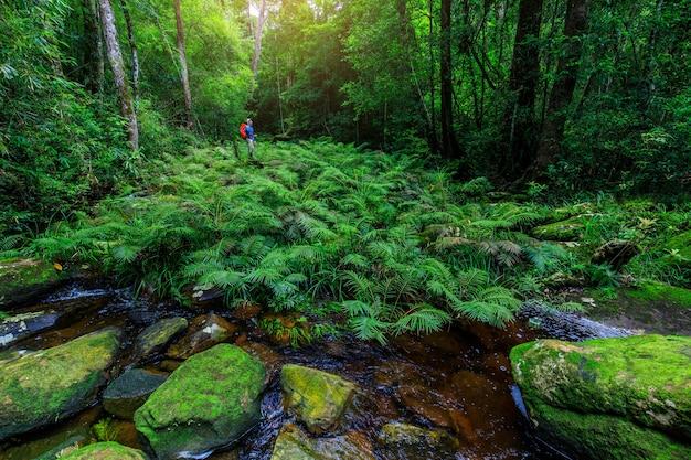Grüner farn im strom im regenwald.