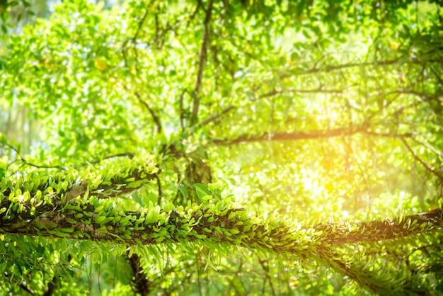 Grüner farn verlässt im wald