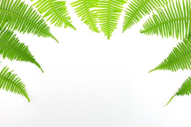 Grüner farnrahmen lokalisiert auf weißem hintergrund