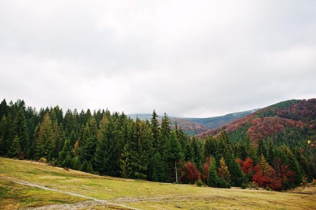 Grüner fichten- und rotherbstwald. herbstwald, viele bäume in den hügeln an den karpatenbergen auf ukraine, europa.