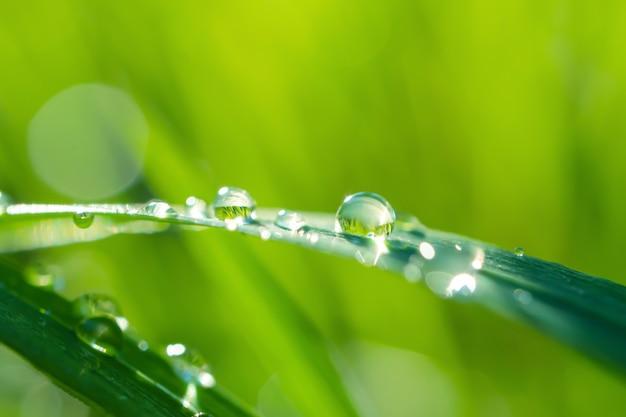 Grüner frischer grashalm der nahaufnahme