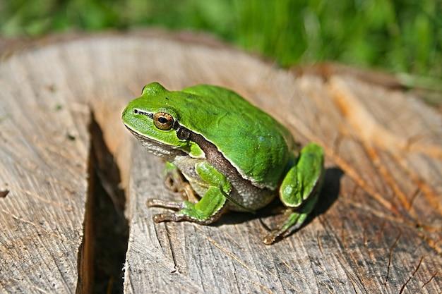 Grüner frosch auf einem protokoll