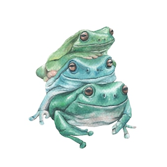 Grüner frosch gestapelte aquarellillustration lokalisiert