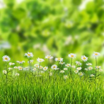 Grüner frühlingshintergrund mit blumen