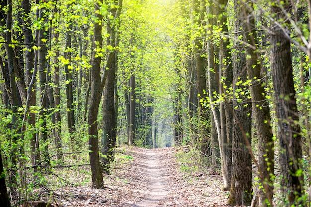Grüner frühlingswald mit ersten frühlingsblättern und weg